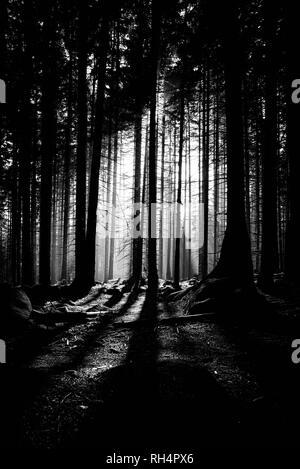 Sonne dringt durch den dunklen Wald und wirft einen langen Schatten - Stock Photo