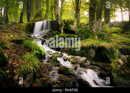 Wunderschöner Wasserfall im Thüringer Wald umgeben von grünen Pflanezn - Stock Photo