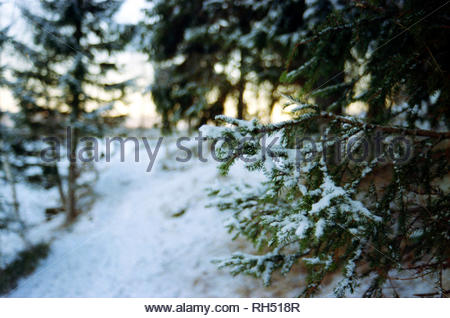 sunny winter day in a forest - Stock Photo
