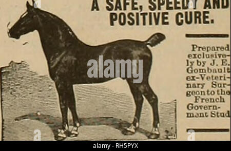 . Breeder and sportsman. Horses. August 19, 1899] BWr* gveebev tmir $p0vt*tttaxu 119 RACING IN THE MIDDLE WEST. A New York Turf Writer Sees a Bright Future for It. SADDLE NOTES. Racing in the Middle West is looking up, and is bound to continue to improve, juBt as it has improved in the East, until they get hack to the old basis of a dozen years ago out there, when they had thirty or forty books on at Latooia and the betting at that track was of as big volume as at any other point in the country. But the development of the sport in the West must in the nature of things be much slower than here. - Stock Photo