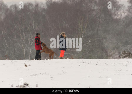 Bramble Hill, Bramshaw, Lyndhurst, New Forest, Hampshire, UK, 1st February 2019, Weather: Dog walkers enjoying being out in the cold after heavy snow in the south of England national park. Credit: Paul Biggins/Alamy Live News - Stock Photo