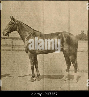 . Breeder and sportsman. Horses. >J0VEMBJ5K 18, 1905J i&ne gtsebex anb gimvisumn 1 SAN BERNARDINO RACES. In spite of rain that fell for two days previous to tho opening1 day, a program of excellent racing was. given by the San Bernardino Driving-Club at its first meeting, which opened on Thursday, November 9th, and con- tinued three days. This meeting was made possible by the enterprise of four of the leading horse breeders of this vicinity, viz: John A. Cole, G. W. Prescott, S. B. Wright and Geo. H. Parker, associated with A. W. Bruner of Los Angeles, who is striving hard to place the  Stock Photo