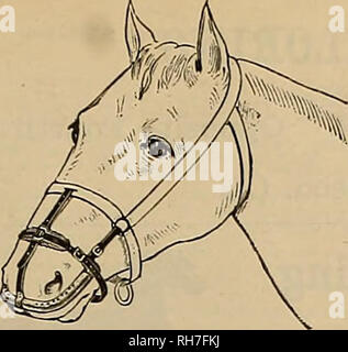. Breeder and sportsman. Horses. Can be worn without discomfort w h il«' feeding and sleeping* A Specific for Catarrh in Horses. Cures and prevents DISTEMPER, and all contagious diseases COUGHS, COLDS, PINK-EYE. IN- PLTJENZA, NASAL, GLEET, HEAVES, etc. The only effectual method invented of applying medicine directly to the seat of the above-mentioned ailments in horses andcattle. Address Welch Inhaler and Medicine Co., 57 Second St., San Francisco, Cal. The L, C, SMITH HAMMERLESS GUNS. Please note that these images are extracted from scanned page images that may have been digitally enhanced fo - Stock Photo