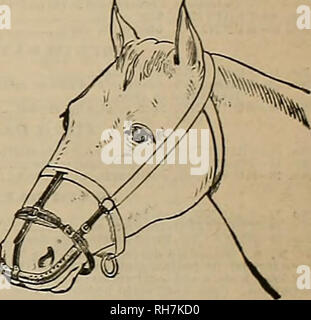 . Breeder and sportsman. Horses. Can be worn 'without discomfort white feeding: &ad sleeping. A Specific for Catarrh in Horses. Cures and preventB DISTEMPER, and all contagious diseases COUGHS, COLDS, PENK-EYE, IN- FLUENZA, NASAL, GLEET, HEAVES, etc. The only effectual method invented of applyinglmedlclne directly to the seat of the above-mentioned ailments In horses andcattle. Address Welch Inhaler and Medicine Co., 57 Second St., San Francisco, Cal. The L, C, SMITH HAMMERLESS GUNS. Please note that these images are extracted from scanned page images that may have been digitally enhanced  - Stock Photo