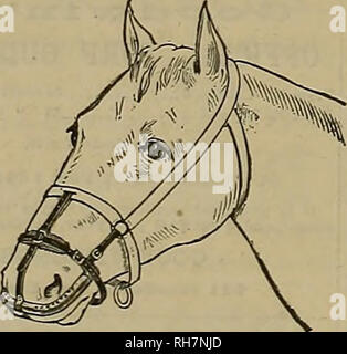 . Breeder and sportsman. Horses. Can T>e2 worn without discomfort  while feeding and sleeping. A Specific for Catarrh in Horses. Cures and prevents DISTEMPER, and aU contagious diseases COUGHS, COLDS, PLNK-EYE, IN- FLUENZA, NASAL, GLEET, HEAVES, etc. The only effectual method Invented of applyingTmedicine directly to the Beat of the above-mentioned ailments in horses andcattle. Address Welch Inhaler and Medicine Co., 57 Second St., San Francisco, Cal. Studehaker Bros. Manufact'g Co, Sole Agents for FRAZIER FEED ALL HORSES CLEAN OATS BY I'MXU I. Please note that these images are extracted f - Stock Photo