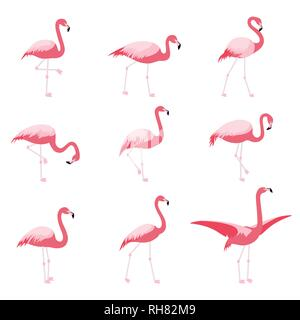 Set of isolated pink flamingoes - Stock Photo