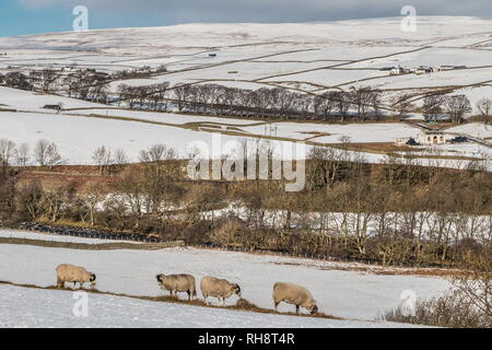 North Pennines AONB Landscape. Towards Ettersgill, Teesdale with a covering of snow and bright winter sunshine - Stock Photo