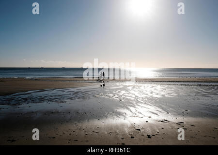 A pair of dog walkers and their dogs taking a winter's morning stroll along Sandown seafront beach, Sandown, isle of Wight, England, UK. - Stock Photo