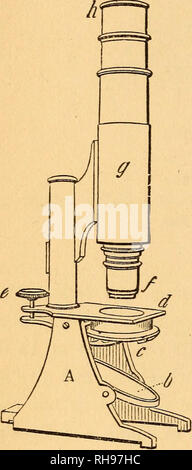 . The botanist's companion; or, Directions for the use of the microscope. Botany; Microscopy. 12 COMPOUND MICROSCOPE. SO as to reflect the light on the object placed on the stage-plate; c is the diaphragm, or stop, or perforated plate attached to the stage, with the view of shutting off the extreme rays of light. The object glass or objective is placed at the lower end of the instrument, /, and the eye-piece or ocular, at the upper part, h. In fig. 15 a diagram is given to explain the mode in which the com- pound microscope acts. In this figure, o is the object, above which is seen the triple  - Stock Photo