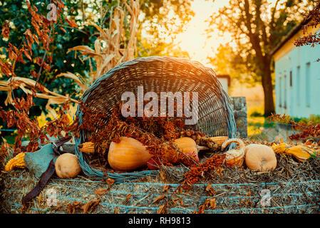 Pumpkins decoration  in basket on autumn garden - Stock Photo