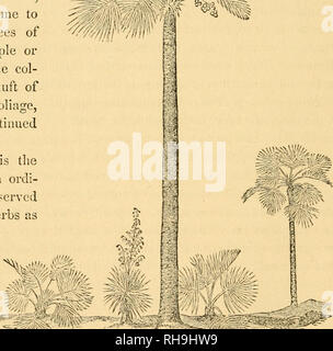 . Botany for young people and common schools. How plants grow, a simple introduction to structural botany. With a popular flora, or an arrangement and description of common plants, both wild and cultivated. Botany. of the whole. Such stems may Avell enough be called inside-groivers, because their wood increases in amount, as they grow older, by the formation of new threads or libres of wood within or amons; the old. 114. Moreover, endogenous stems are apt to make few or no brandi- es. Asparagus is the only common example to the contrary ; that branches freely. But the stalks of Corn and other  - Stock Photo