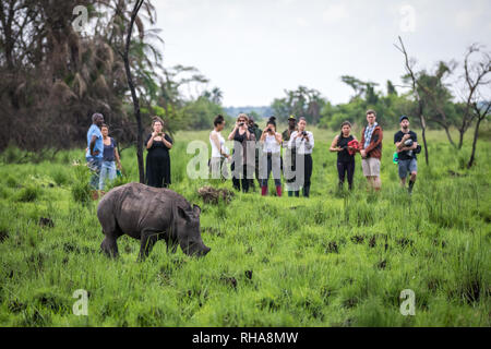 Tourists photographing southern white rhinoceros (Ceratotherium simum simum) calf during safari in Ziwa Rhino Sanctuary, Uganda - Stock Photo