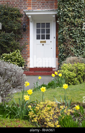 Front door to a period English house in London with a flower garden in spring planted with daffodils - Stock Photo