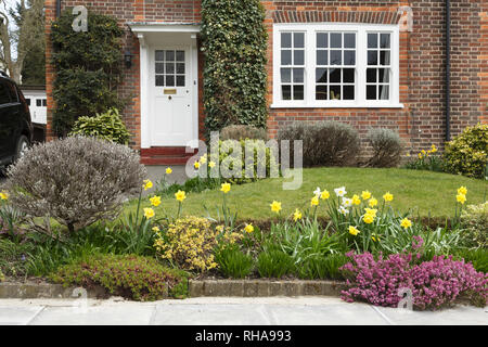 A period house in Pinner, London, with a front garden planted with daffodil flowers - Stock Photo