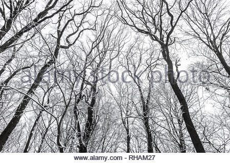 snow, winter in Hambacher Forst near Dueren, western Germany, Jan 31, 2019 - Stock Photo