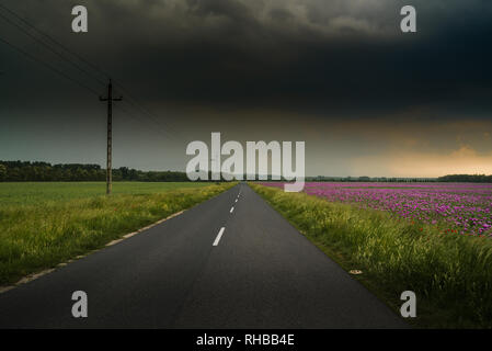 Road across opium poppy field with dramatic sky - Stock Photo