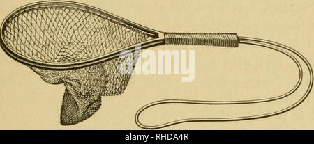 ". Book of the black bass. Black bass; Bass fishing. plan, with lock joint, as the expensive English whalebone collapsing net-ring. xn advantage of this ring is that the net can be left on when folded. The "" I-D-L "" short-handled net ring is made on the same plan by the same firm. It is coated with rub- ber enamel, and has a rubber elastic cord hy ^ which it is carried over the shoulder. It will be seen that it is not necessary to remove the cord from the shoulder when landing a fish, owing to its stretching enough to allow this to be done. The wooden frame short-handled net made by  - Stock Photo"