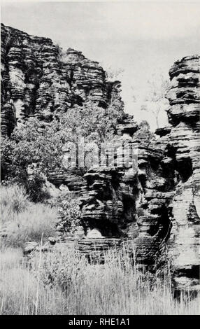 . Bonner zoologische Monographien. Zoology. 184. Fig.90: Sandstone outliers at the western edge of the Arnhem Land Escarpment, Ngarragji Warde Djobkeng, near East Alligator Station, Kakadu National Park, Northern Territory, Australia — typical habitat of Rhacodactylus lindneri. ACKNOWLEDGMENTS I would like to thank the students, faculty, and staff of the Museum of Vertebrate Zoology and Department of Zoology at the University of CaHfornia, Berkeley for their years of helpful support and friendship. In particular, I acknowledge the guidance and support of Marvalee Wake. David Wake, Kevin Padian - Stock Photo