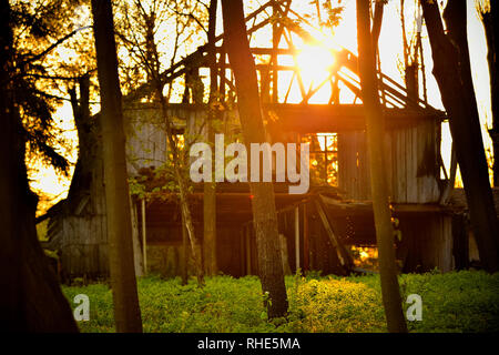 Old wooden barn building stands abandoned in a woodland, view through the trees, during spring sunset - Stock Photo