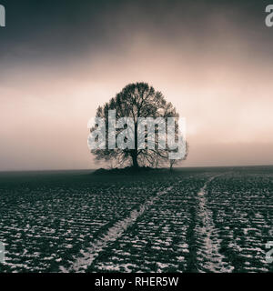 Linden tree at cold foggy sunset - Stock Photo