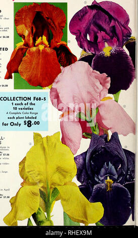 . Bolgiano's fall 1968. Nurseries (Horticulture) Catalogs; Bulbs (Plants) Catalogs; Seeds Catalogs; Trees Catalogs. Free Blooming and £as/-fo-Grow TEN Sccuitiicd IRIS See page 11 for complete list and prices of individual varieties. THE FIVE ILLUSTRATED ® Ranger. Deep near crimson-red. ® Happy Birthday. New rich clear pink. ® Tabu. Ebony-blue-black. ® Solid Gold. Deep rich yellow. ® Argus Pheasant. Argus-brown with self beard. Still the best in this color. COLLECTION F68-18 One each of the above five for $4.50 THE FIVE NOT ILLUSTRATED Accent. Yellow standards, rose- red falls. Blue Rhyth - Stock Photo