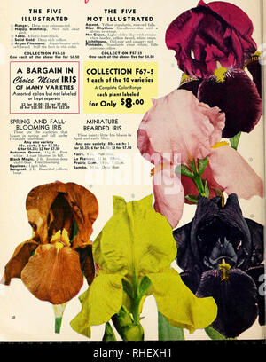 . Bolgiano's fall 1967. Nurseries (Horticulture) Catalogs; Bulbs (Plants) Catalogs; Seeds Catalogs; Trees Catalogs. Free Blooming and Easy-to-Grow TEN Sccuct^cd IRIS See page 11 for complete list. Individual prices for all 10 varieties: $1.00 each; 3 for $2.50 THE FIVE ILLUSTRATED O Ranger. Deep near crimson-red. © Happy Birthday. New rich clear pink. ® Tabu. Ebony-blue-black. q) Solid Gold. Deep rich yellow. ® Argus Plieasant. Argus-brown with self beard. Still the best in this color. COLLECTION F67-18 One each of the above five for S4.50 A BARGAIN IN OF MANY VARIETIES Assorted colors but not - Stock Photo