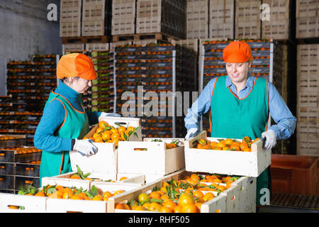 Two diligent cheerful smiling female employees of fruit warehouse in colored uniform labeling fresh ripe mandarins in crates - Stock Photo