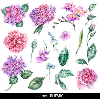 Set of Summer Watercolor Flowers Hydrangea, Freesia, Roses, Garden Flowers, Leaves and Buds Watercolor Botanical Floral Natural Collection Isolated on - Stock Photo