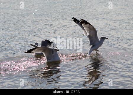 Birds on the Colorado River - Stock Photo