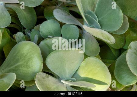 Succulent, Santa Fe, New Mexico - Stock Photo