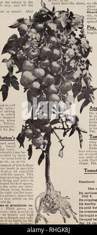 . Boddington's quality bulbs, seeds and plants / Arthur T. Boddington.. Nursery Catalogue. BODDINGTON'S ^A^CltlPl/ SEEDS 65 Heliantl '^'^ wonderful new winter vegetable. The greatest ad- •' dition to the vegetable kingdom for many years. A complete substitution in taste for fresh asparagus. Yields half as much again as the potato. Description.—Helianti is a hybrid of the sunflower family. It attains a height of lo feet or more, is very ornamental with its deep ffreen fohage and produces an abundance of bright yellow flowers, its important economic use, however, is the edible root tubers. It h - Stock Photo