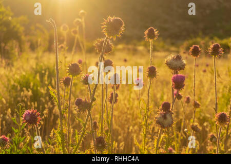 Golden light over wildflowers in patagonia - Stock Photo