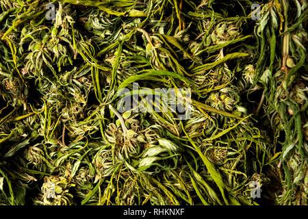 Marijuana cannabis hemp in blossom on a pile top view - Stock Photo