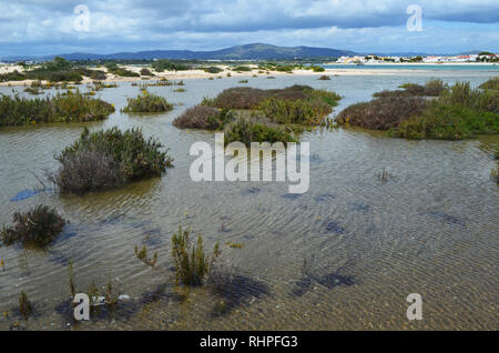 Salt marshes in Armona island, part of the Ria Formosa Natural Park in the Algarve region of southwestern Portugal - Stock Photo