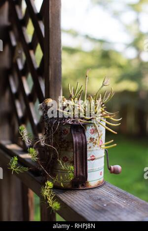 A succulent plant growing in an antique sifter on a porch rail. - Stock Photo