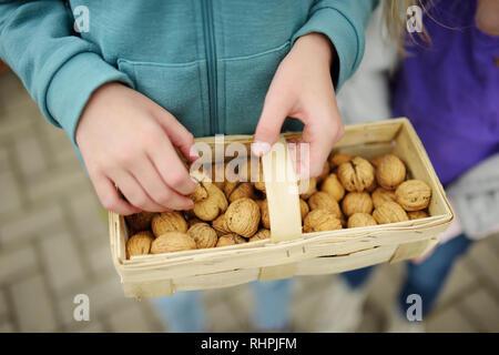 Child holding a basket of fresh walnuts. Walnut harvest. - Stock Photo