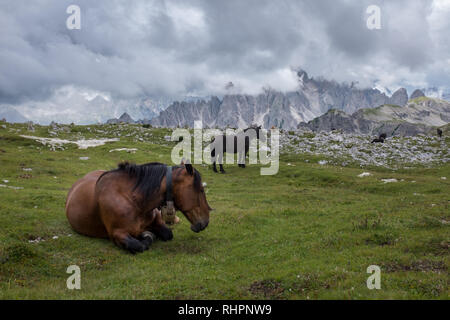 Wild horses resting in a green meadow in the Dolomites - Stock Photo