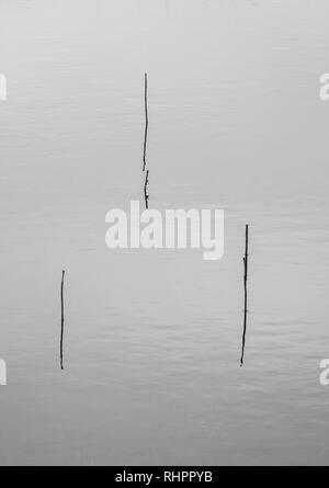 Glencoe loch minimalist shot - grass stems emerging from water - Stock Photo