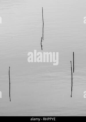 Glencoe loch minimalist shot - grass stems emerging from water - Stock Photo