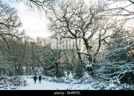 Two distant figures walk through snowy woods with trees covered in snow in warm late afternoon light on Hampstead Heath, London UK - Stock Photo