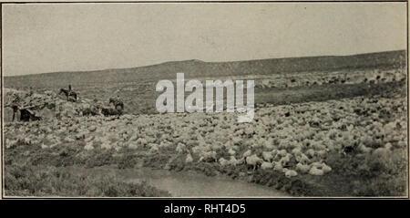 Biggle sheep book  Sheep  Chapter XIII  BARN QUARTERS