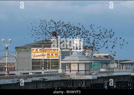 Blackpool, Lancashire. 4th Feb, 2019.  Tens of thousands of starlings leave their roost under Blackpool's Victorian north pier at dawn. These amazing birds put on a stunning flight display at one of only a handful of their favourite sites throughout the UK. The huge flocks of starlings, having taken shelter overnight, whose numbers are estimated at 60,000 are joined by migratory flocks from the colder continent, before heading inland towards the fields seeking food. Credit: MediaWorld Images/Alamy Live News - Stock Photo