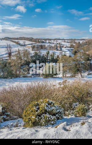 Egglestone Abbey, Barnard Castle, Teesdale in a snowy landscape and winter sunshine with a flowering Gorse bush in the foreground - Stock Photo