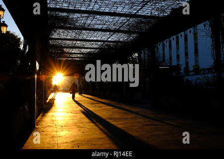Foliage covered avenue walkway illuminated by strong sunset with bikes riders and walkers in silhouette casting long shadows Seville Spain - Stock Photo
