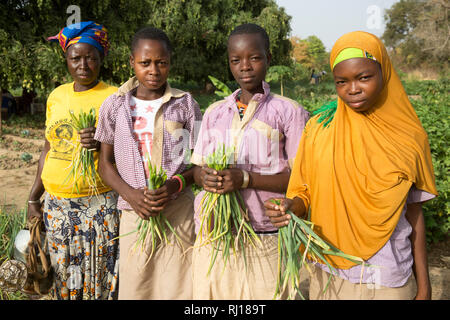 Samba village, Yako Province, Burkina Faso; Girls picking onion tops on a plot. Members of the market garden watering and tending their plots. - Stock Photo