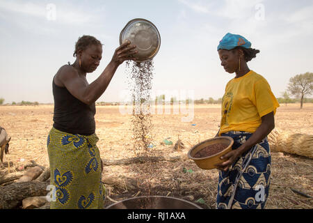 Kourono village,Yako province, Burkina Faso. left, Minata Guiguemde, 37, with 5 children, and Kadissa Seogo, 30 with 2 children, winnowing sorghum. Kadissa benefitted from the goat project. - Stock Photo