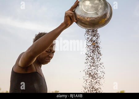 Kourono village,Yako province, Burkina Faso, Minata Guiguemde, 37,winnowing sorghum, grown on her family's farm. - Stock Photo