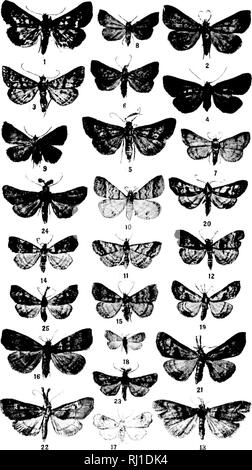 . Contributions toward a monograph of the insects of the Lepidopterous family Noctuidae of boreal North America [microform] : a revision of the Deltoid moths. Noctuidae; Lepidoptera; Moths; Noctuidés; Lépidoptères; Hétérocères. U S. NATIONAL MUSEUM BULLETIN 48, PL. V. SPECIES OF BLEPTINA, HETET-tOGRAMMA, GABERASA. DERCETIS, AND PALTHIS. (For expliiimtiiiii of plate see miitf r,'-'.i. Please note that these images are extracted from scanned page images that may have been digitally enhanced for readability - coloration and appearance of these illustrations may not perfectly resemble the origina - Stock Photo