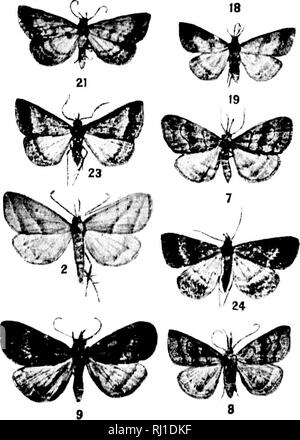 . Contributions toward a monograph of the insects of the Lepidopterous family Noctuidae of boreal North America [microform] : a revision of the Deltoid moths. Noctuidae; Lepidoptera; Moths; Noctuidés; Lépidoptères; Hétérocères. v>feP '*!'- 12 16. Please note that these images are extracted from scanned page images that may have been digitally enhanced for readability - coloration and appearance of these illustrations may not perfectly resemble the original work.. Smith, John B. (John Bernhard), 1858-1912. Washington : G. P. O. - Stock Photo