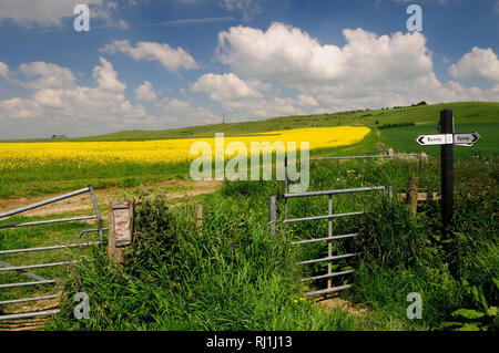A byway junction near the Lansdowne Monument on Cherhill Hill (Oldbury Castle), a distinctive landmark on the Wiltshire Downs. - Stock Photo